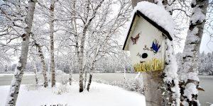 Vogelhäuser & Nistkästen