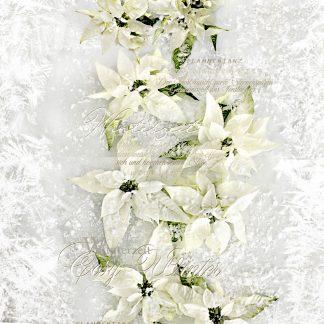 Kissenh Lle Christmas Elegance 2600 Apelt 46x46 Weihnachtsstern Wei 1 324x324