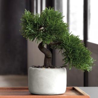 Bonsai MINI KIEFER ASA H 24,5 cm
