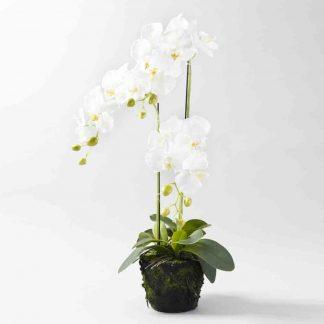 Kunstblume Orchidee Avatar Mit Ast Zum H Ngen H 29 Cm Kopie 324x324