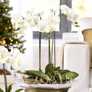 Kunstblume Orchidee Mit Erde H 65 Cm 9 324x324