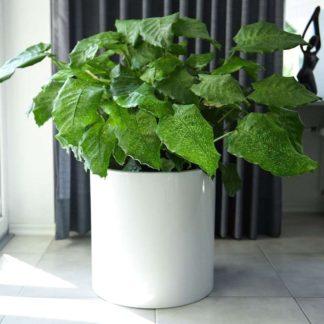 Pflanzkübel ROSANE weiß 43 x 43 cm
