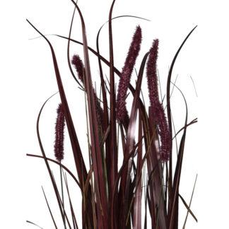 Kustpflanze G R A S Im Topf Dunkelrot 20x90 Cm 7