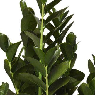 Kunstpflanze Z A M I O C U L C A S 34 X 86 Cm 5 324x324