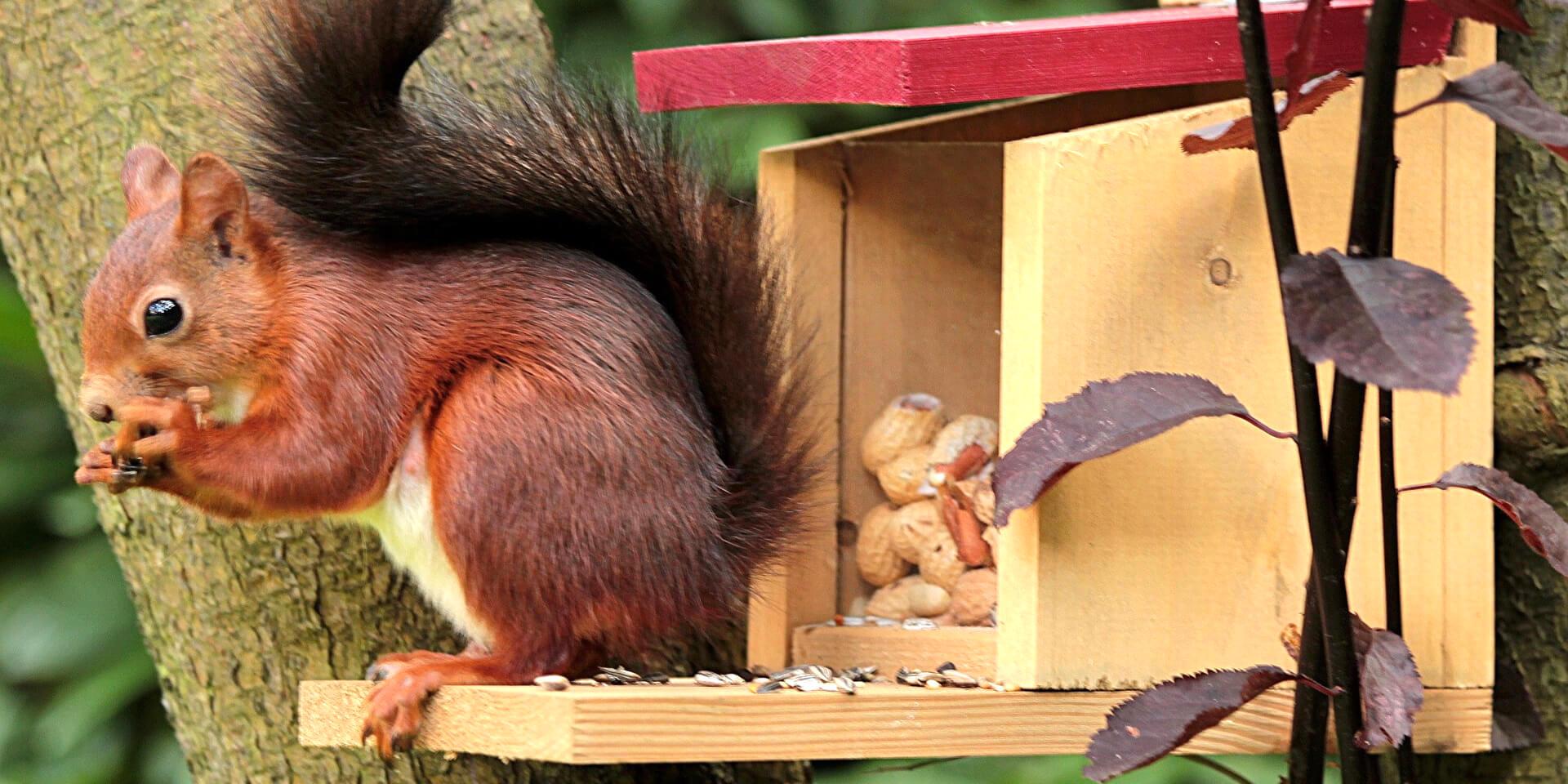 Igelhäuser & Eichhörnchen Futterhäuser